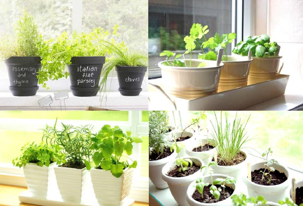 Kitchen herb garden ideas herb garden in kitchen for Kitchen herb garden